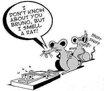 smelling a rat