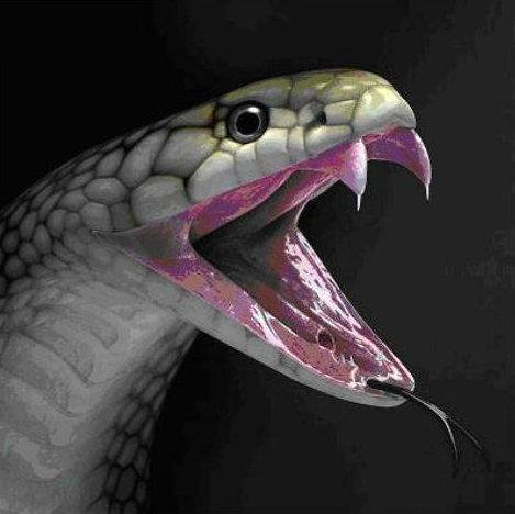 usury  neshek  snakebite